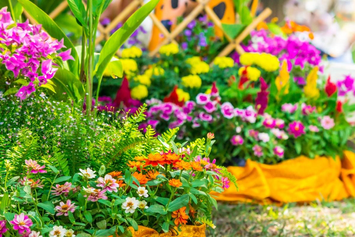 Однолетние цветы для сада дачи фото